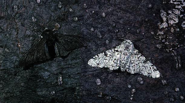 Light and Dark Variants on dark bark